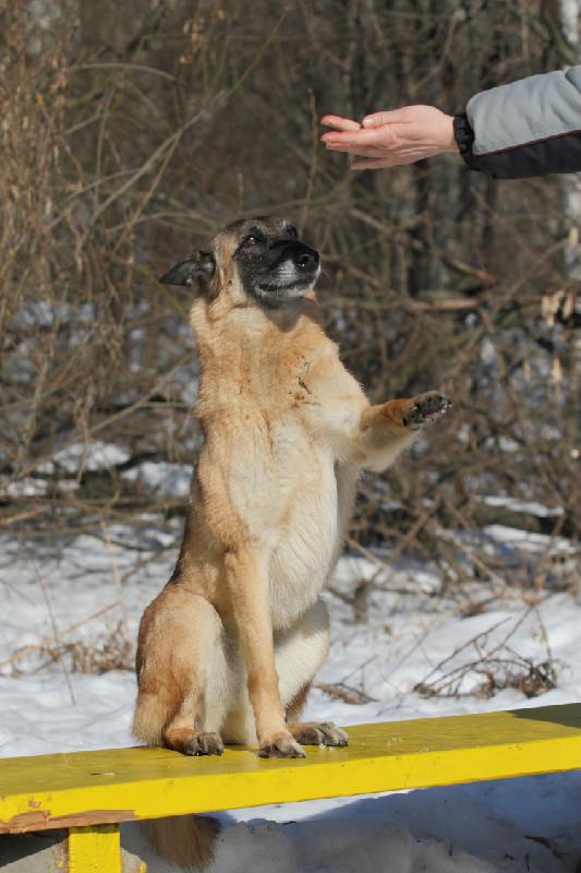 """Танцы с собаками """"Испанский шаг"""" 1"""